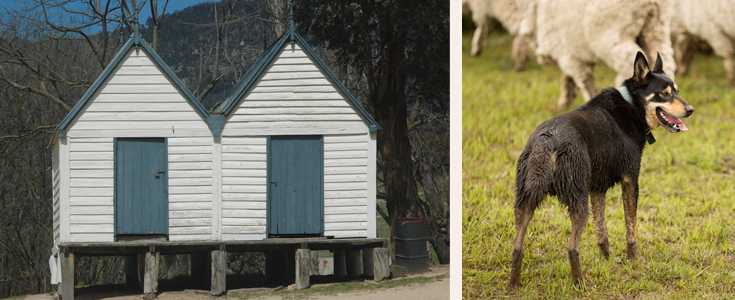 Booroomba twin huts and working dog